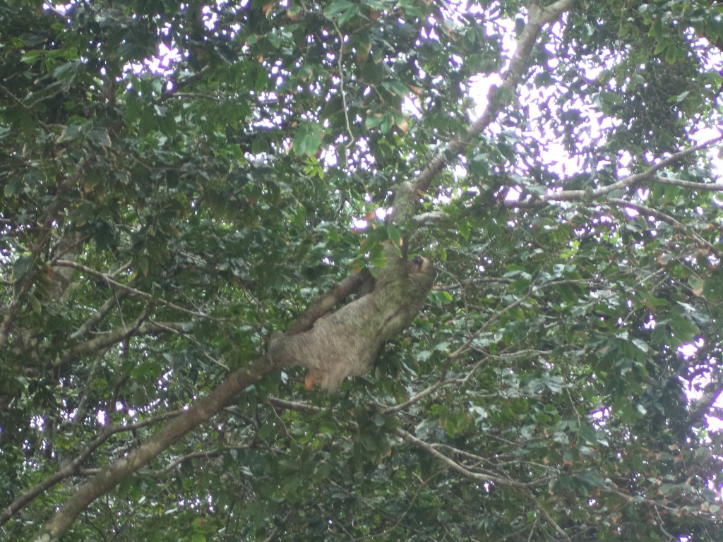 5onthego, sloth at manuel antonio.